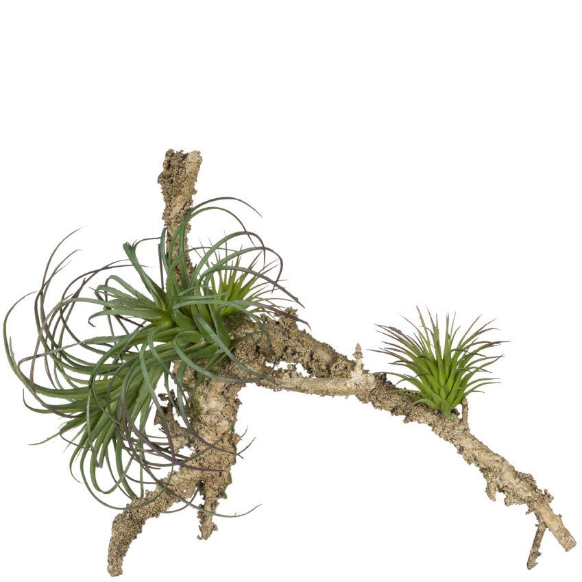 Faux Mounted Air Plants