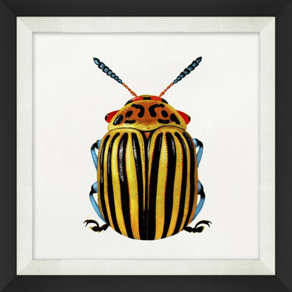 Graphic Insects Artwork