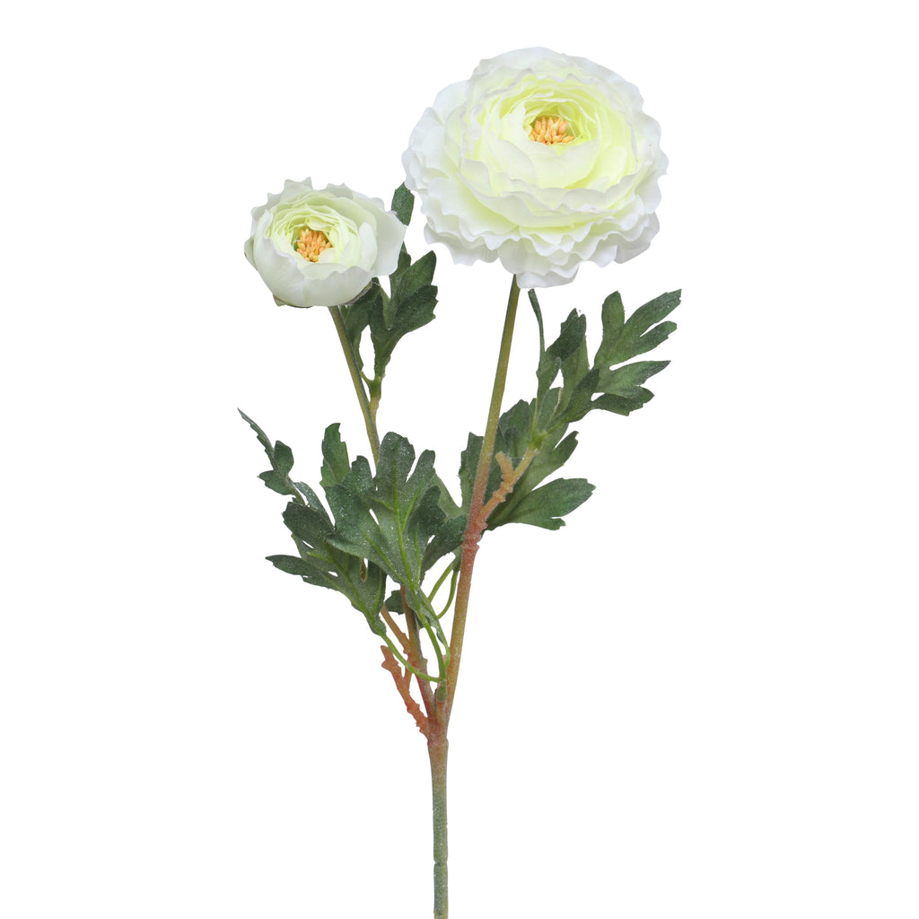 Double Cream Ranunculus Stem