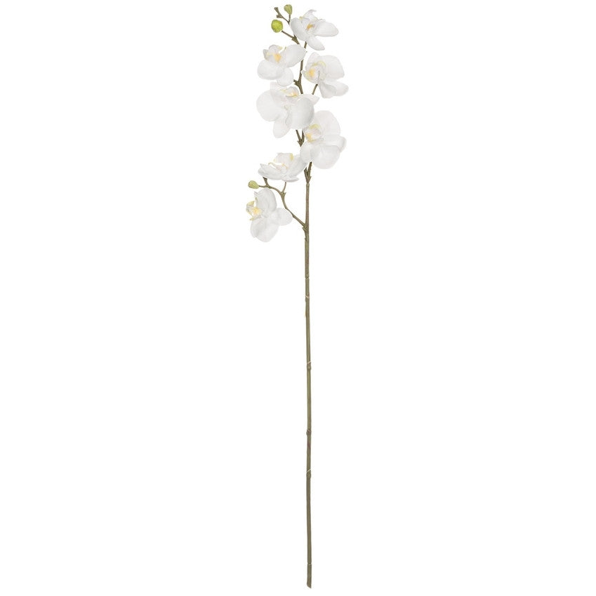 White Phalaenopsis Spray