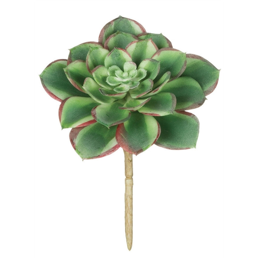 Pink & Green Aeonium Stem
