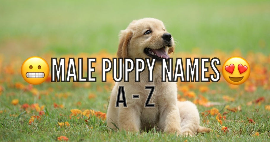 Name Ideas for your Puppy (Male)