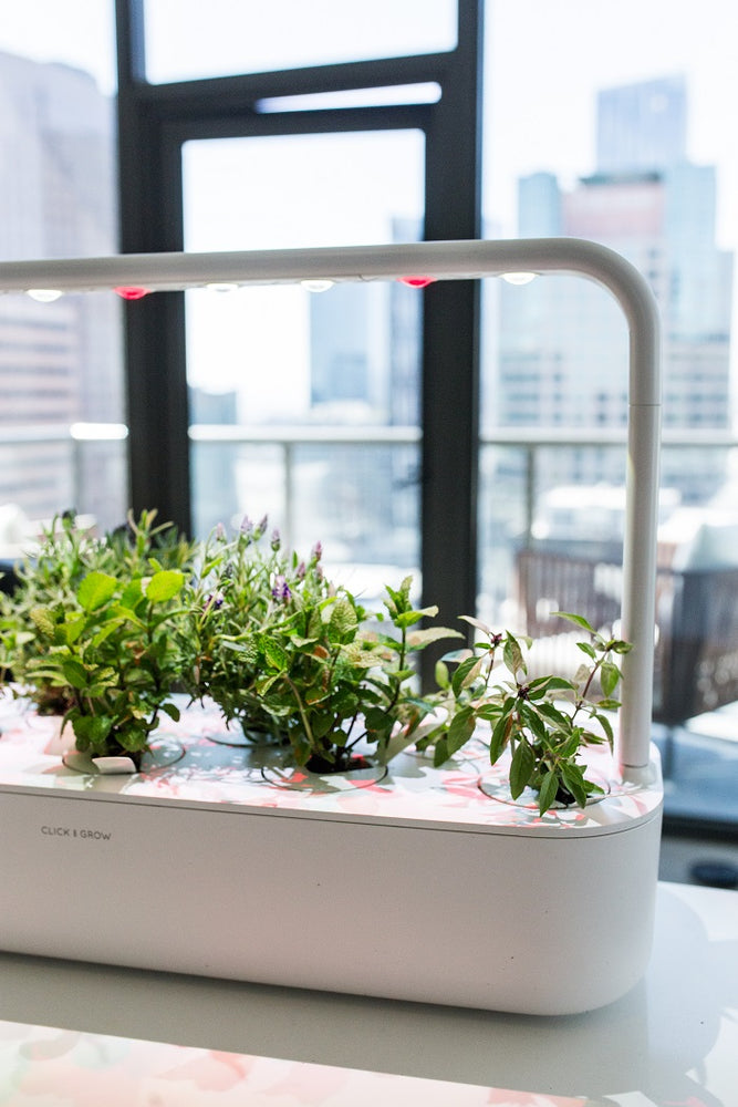 5 Reasons Why You Need Plants In Your Office