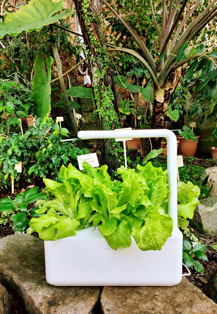 5 Quirky Reasons to Buy a Smart Garden This Week