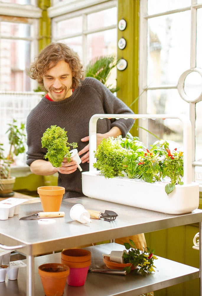 8 No-Nonsense Indoor Gardening Tips You Can't Ignore