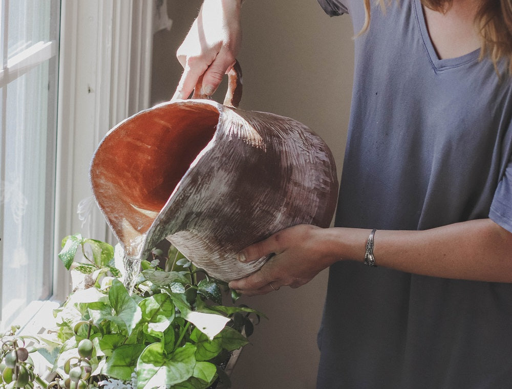 Spring Houseplant Care: 5 Tips to Help Your Plants Flourish