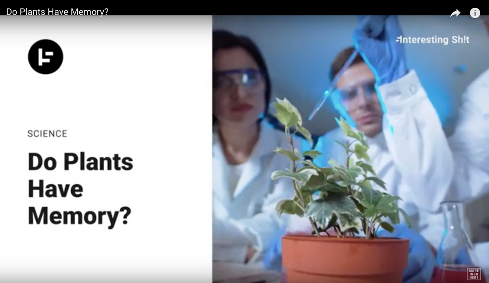 Do Plants Have Memory?