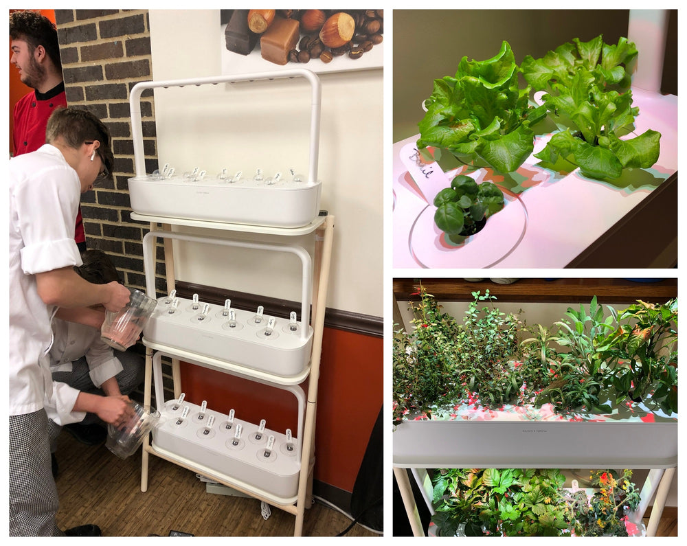 Growing With The Smart Garden 27: A Culinary Arts Instructor's Story