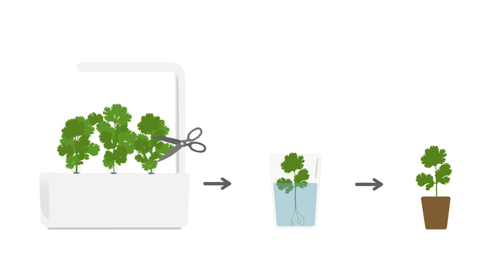 Tip of the Week - Cloning Your Plants