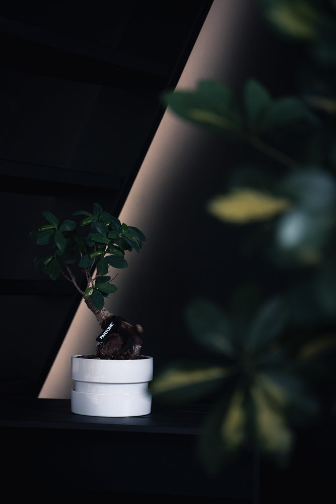 5 Trendy Low Light Houseplants That Anyone Can Grow
