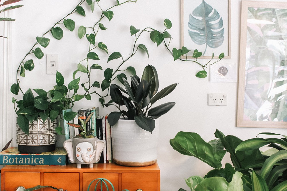 Green houseplants on a desk of drawers in a cozy room.
