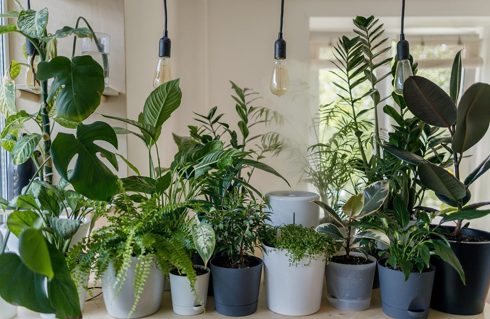 Green potted houseplants lined up closely together indoors.