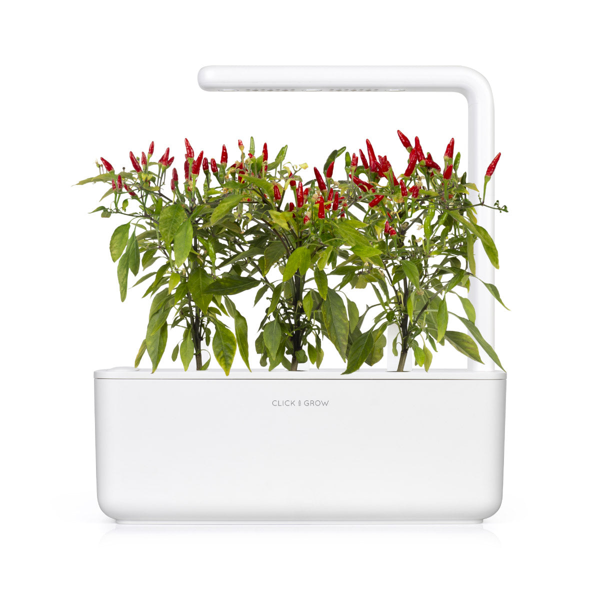 Piri Piri Chili Pepper grow chili pepper at home Click & Grow indoor garden