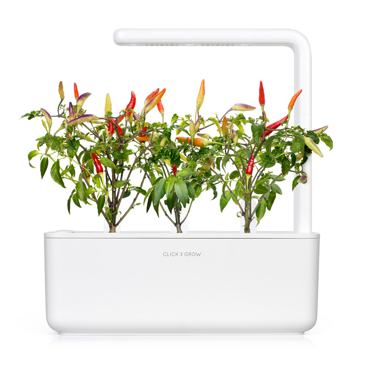 Red Hot Chili Pepper Plant Pods