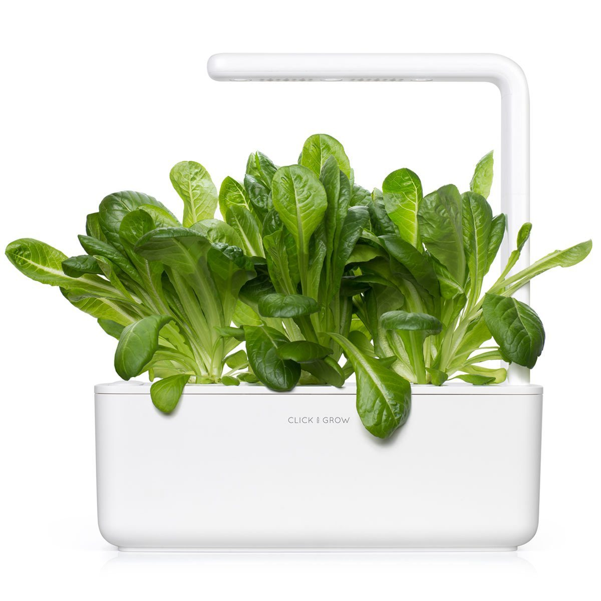 Romaine lettuce -grow lettuce at home - Click & Grow - indoor herb garden kit