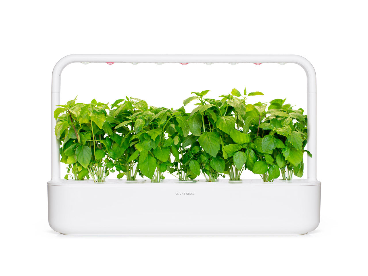 Cinnamon Basil - grow basil at home with a smart indoor herb garden