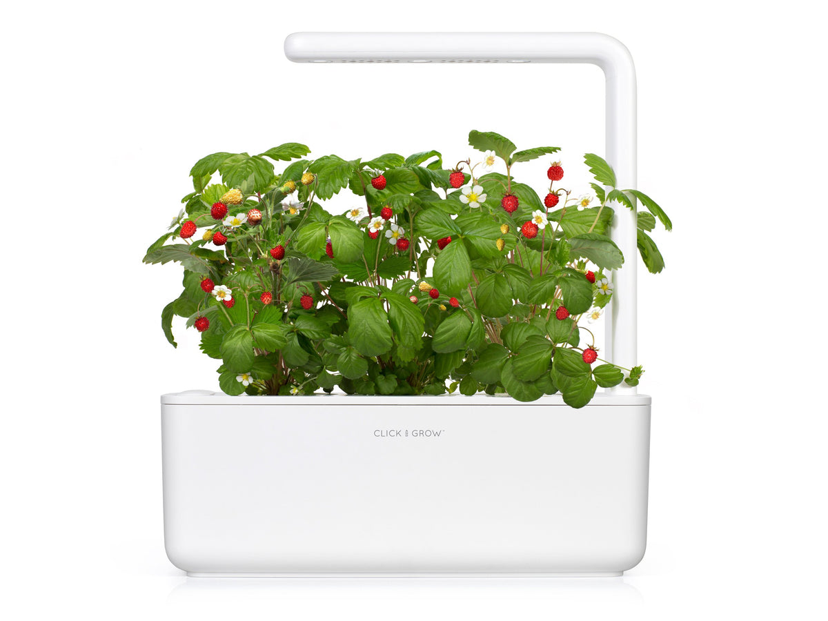 Grow strawberries at home with an indoor garden by Click & Grow. The best plant growing kit out there!