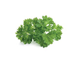 Parsley 9-pack