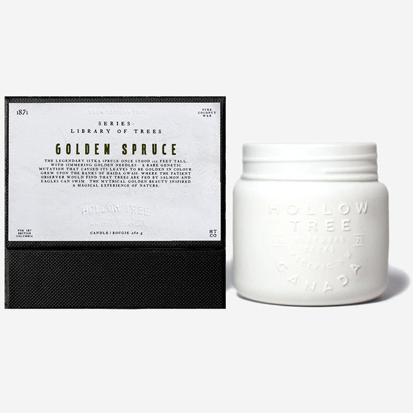 Hollow Tree - Library of Trees - Golden Spruce Candle