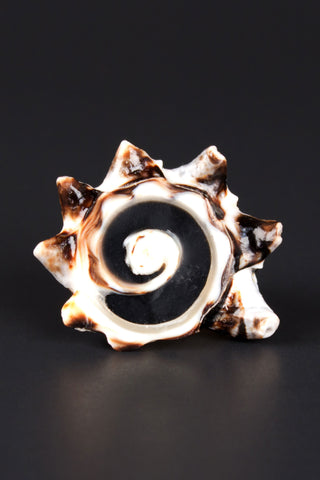 Sliced Conch Shell Ring