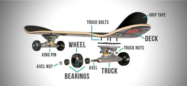 Anatomy of a skateboard by Modern Skate and Surf.  Get what you need