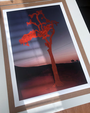 "Delaney Allen ""Pioneertown, CA"" 16x24 Print"