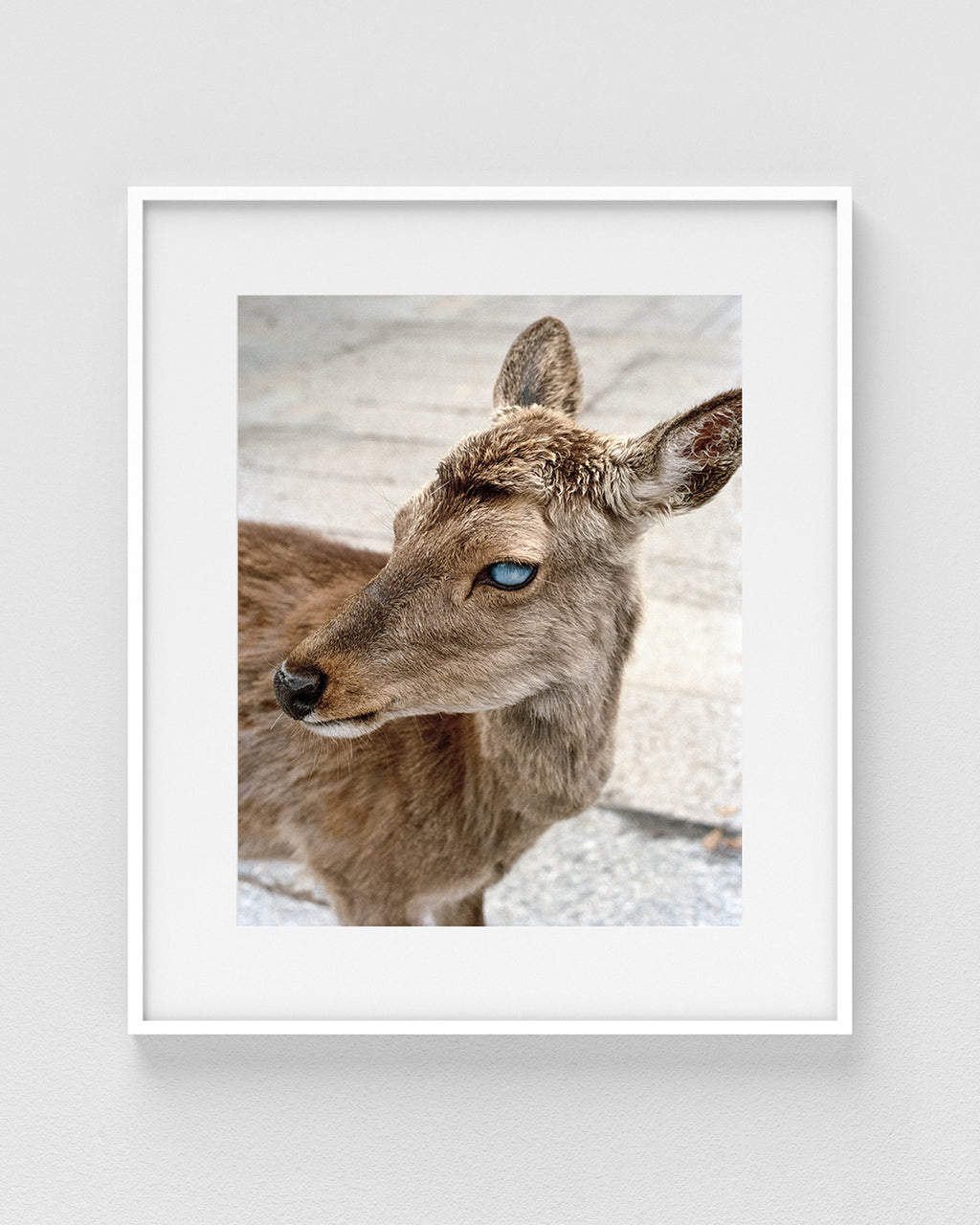 "Alana Paterson ""Blind Deer of Nara Bridge"" Print"