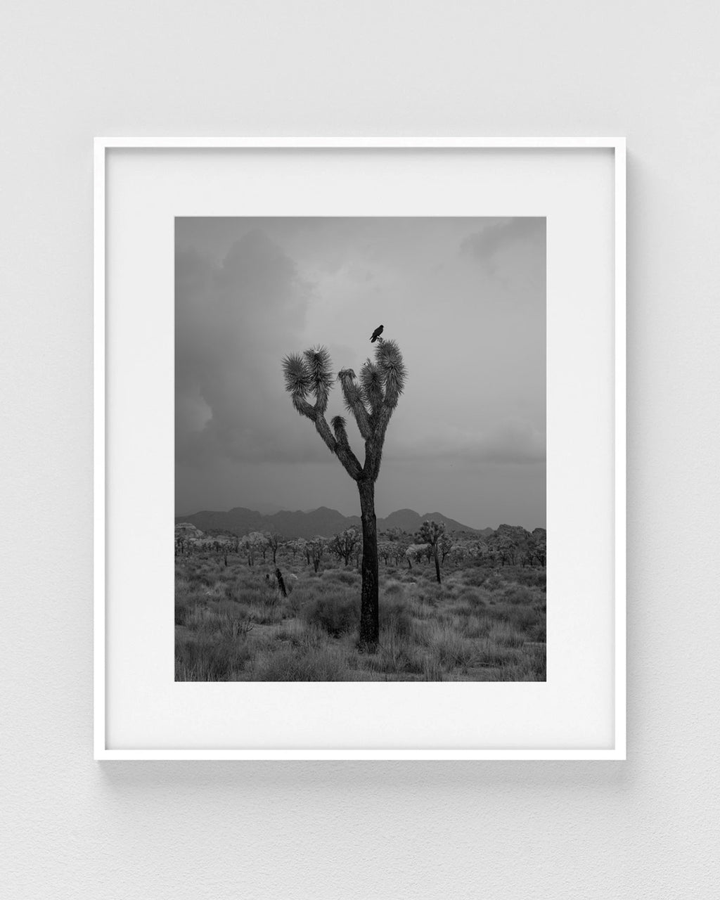 "Madeline Cass ""Covus Corax / Yucca Brevifolia"" Print (Edition of 40)"