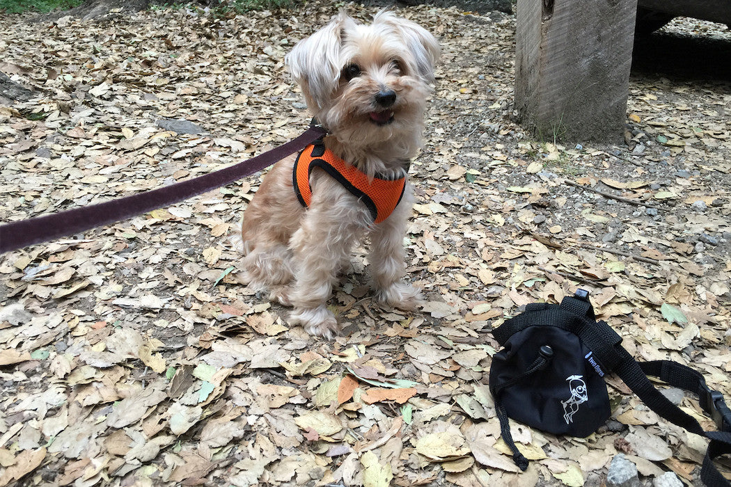 Reward your Dog Using a Dog Treat Bag
