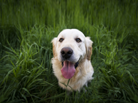 Why is deworming your pet so important?