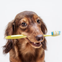 Dental care for pets – what you need to know!