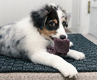 How to handle a puppy who loves to chew everything!