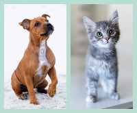 A quick guide to puppy & kitten care