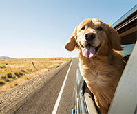 Our top tips for travelling with pets