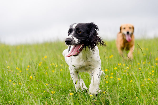 A guide to vaccines, deworming and tick and flea treatment