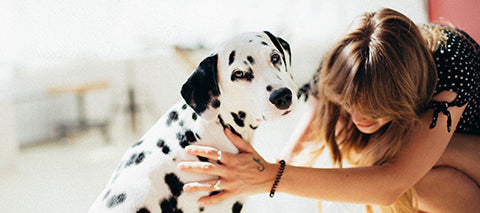 Dalmation and pet parent