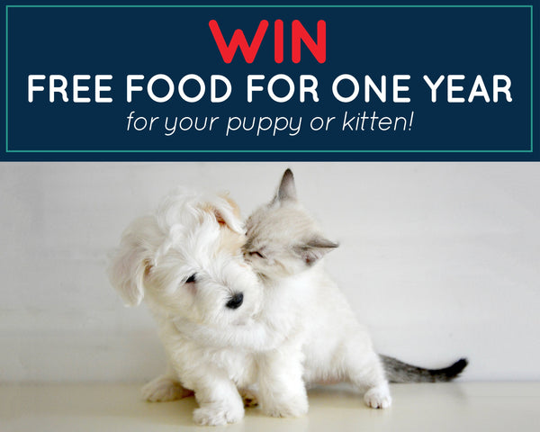 Hill's puppy kitten food competition_Absolute Pets
