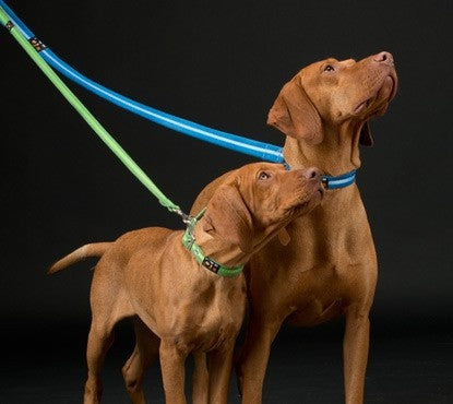Luxury Contemporary Dog Leads