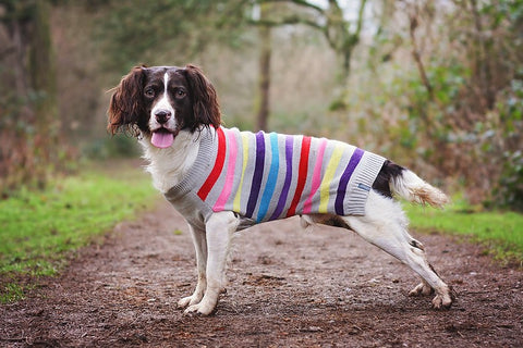 Grey Stripe Dog Jumper by Sötnos