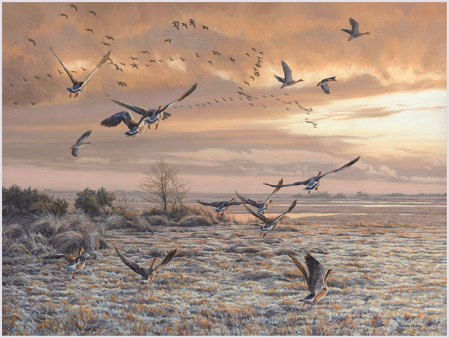 Print of Greylag geese lifting up from frosty marshland