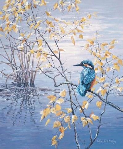 Print of Kingfisher & Birch Leaves