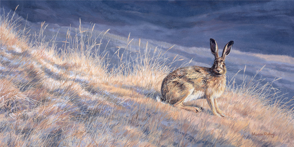 Brown hare print - Reproduced from an original oil painting by Martin Ridley