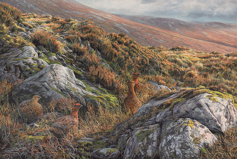 """On Alert"" Red Grouse Covey"