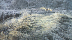 Barn owl hunting over frosty grass picture - limited edition print