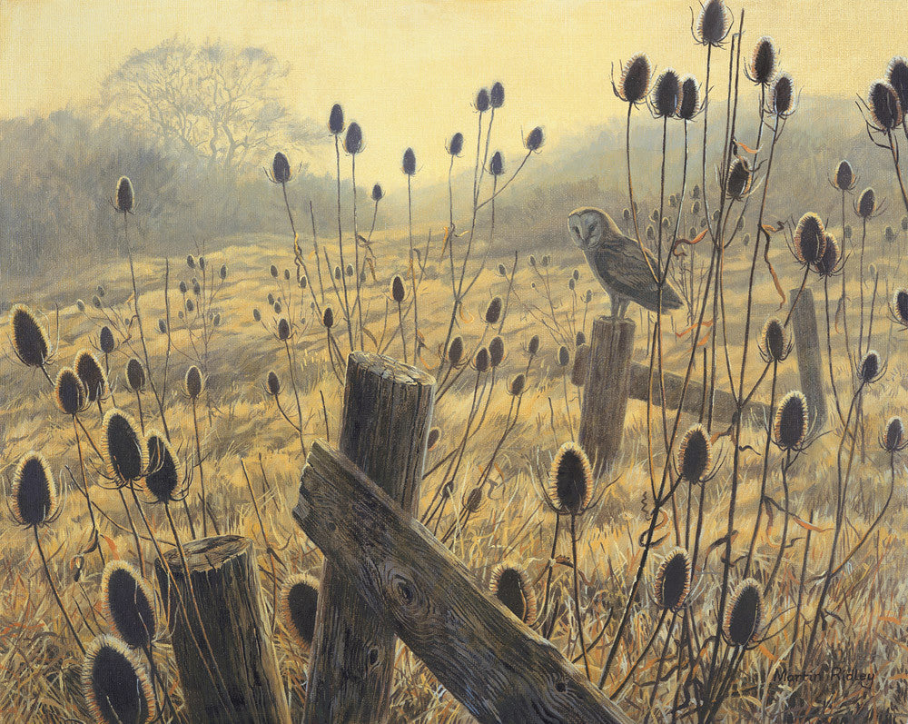Picture of a Barn Owl and Teasels - Barn owl print by Martin Ridley