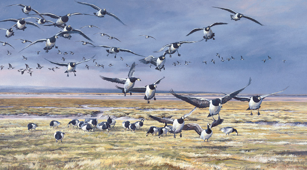 """incoming Barnacles"" Geese Prints for Sale by Martin Ridley Wildfowl Artist"