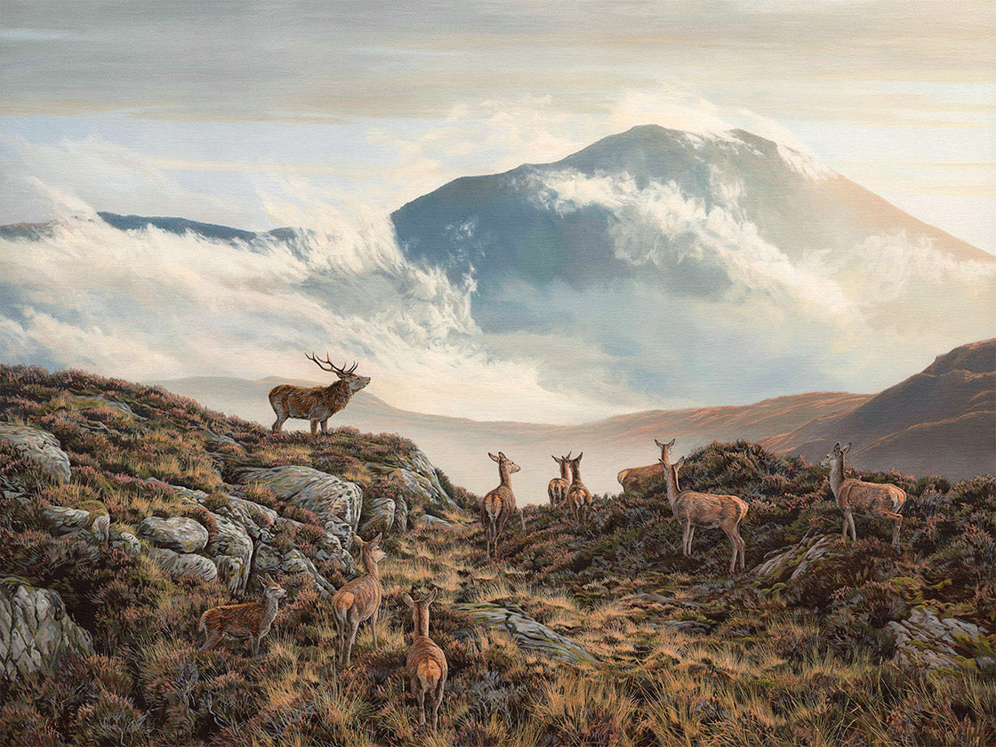 Picture of Red deer stag & hind on Ben Vorlich