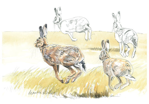 """Bouncing Along"" Brown Hares Print"