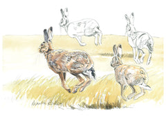 Running brown hares sketch / drawing
