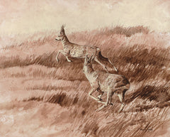 Chasing roe bucks print - Roe Deer Picture by Martin Ridley
